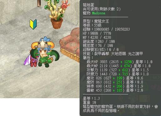 龍魔力lv55