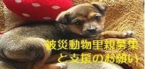 猫人(^ω^)-犬猫救済の輪