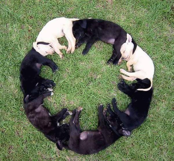 dogcircle.jpg