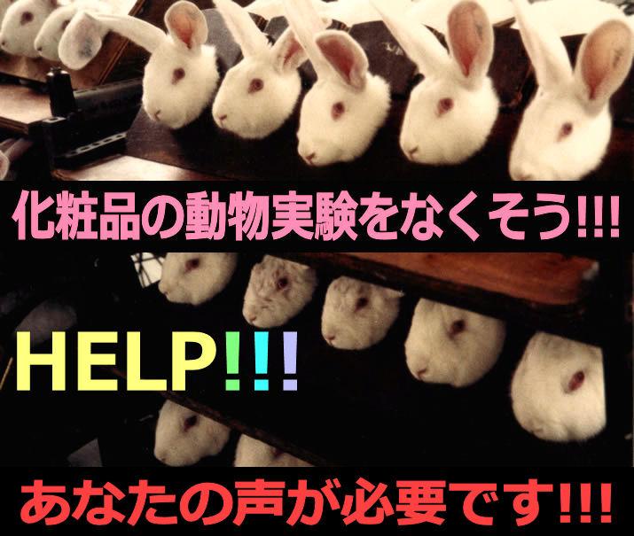 rabbitB.jpg