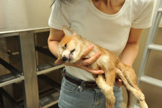 1年間に殺処分される犬猫20万匹 ...