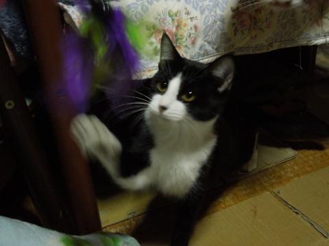 くるみちゃんの猫パンチ