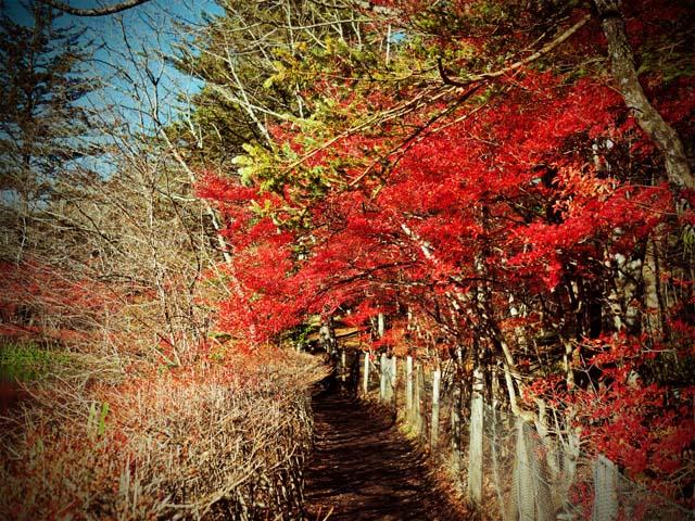 2014_軽井沢 雲場池09