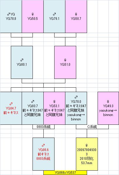 866xbinnon537系統図