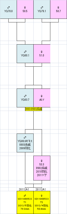 866x533系統図