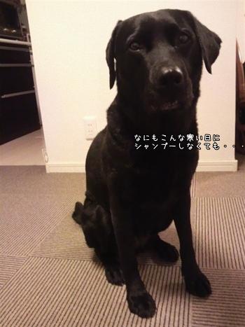 momo20111227-3jpg.jpg