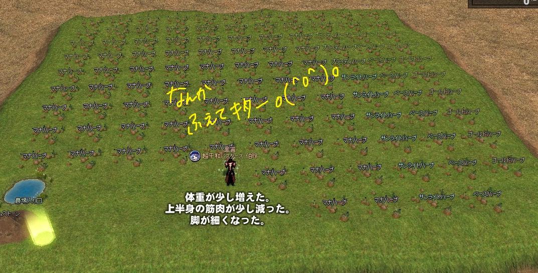 mabinogi_2012_02_17_002.jpg