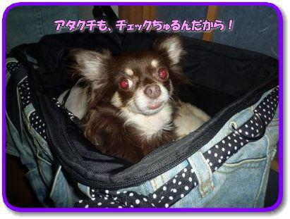 image9_20110922024414.jpg