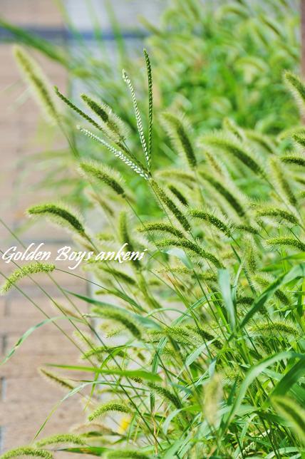 072  植物