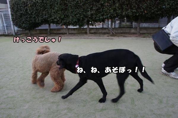 DSC0707120130103.jpg