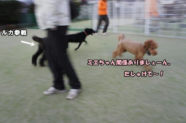 DSC0708120130103.jpg