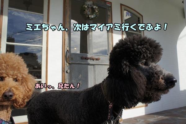 DSC0711520130104a.jpg