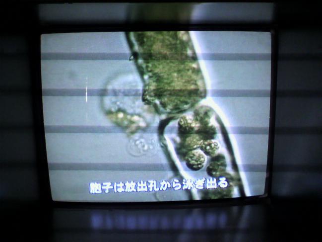2011102012270002.jpg