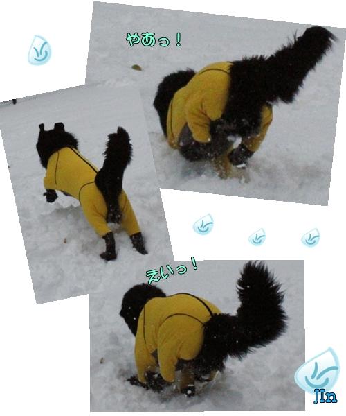 cats ジン雪遊び