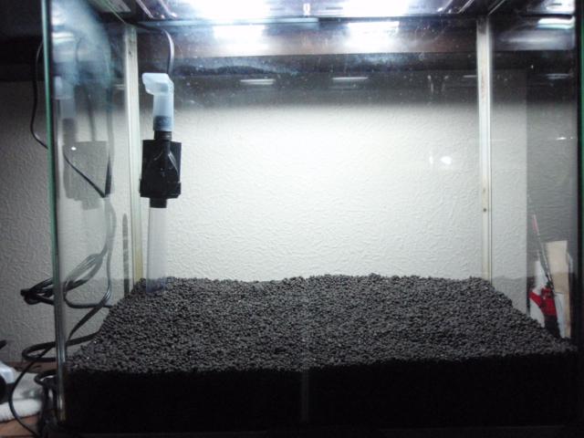 グッピー水槽2