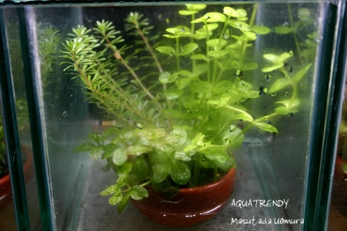 plant001.jpg