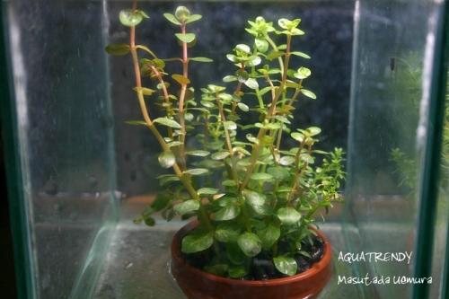 plant002.jpg