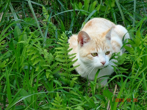 狩猟猫121020