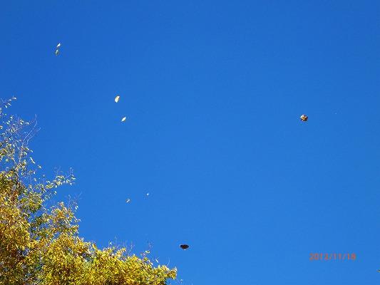 舞い飛ぶ木葉121118