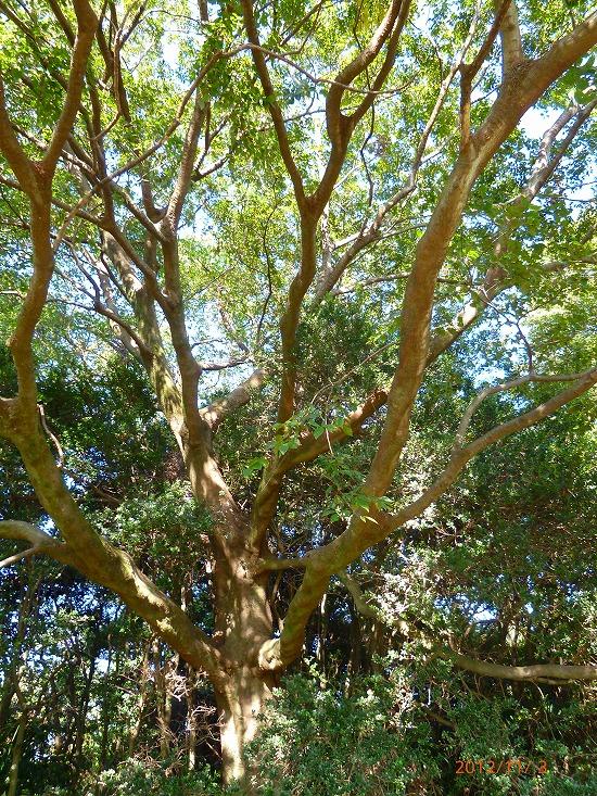 陽光を受ける木々121103