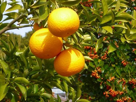 柚子ではない130105