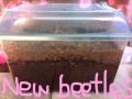 new beetles