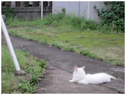 2011-09-01-09.jpg
