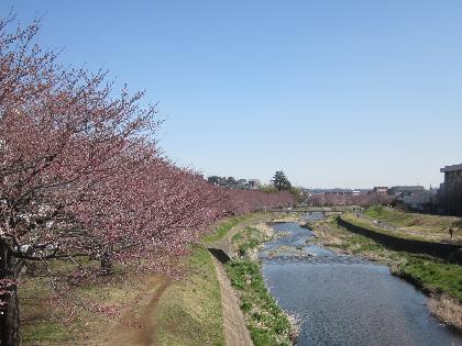 2012桜0