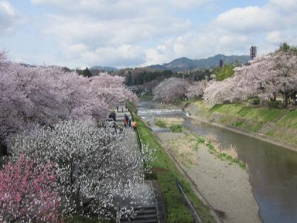 2012花見5