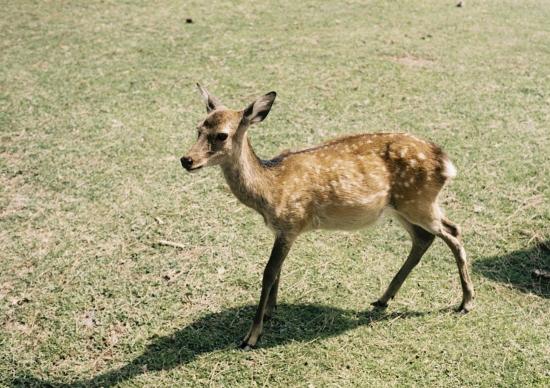 鹿さん、可愛い♪