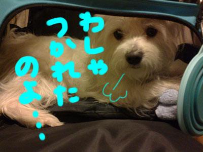 shiro_A96のコピー