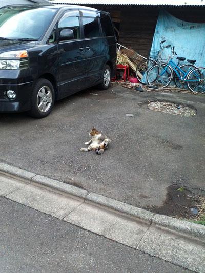cat_t625.jpg