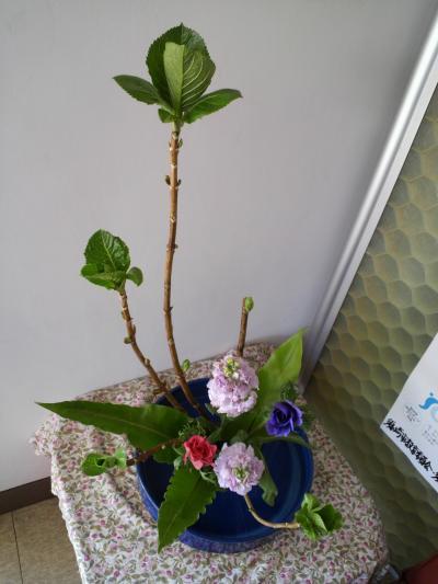 今週の花2