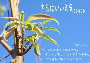 繝悶Ο繧ー_convert_20110906181543