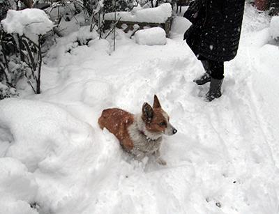 雪のわんこ