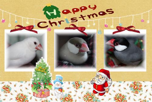 2011クリスマス-1