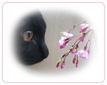 CIMGノア桜2963