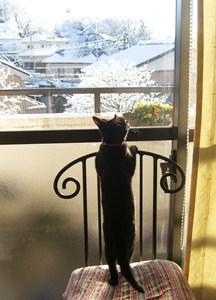 雪を見るノア