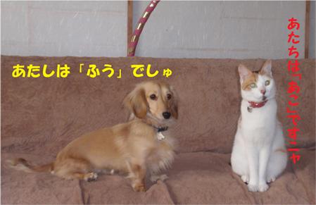fu and ako