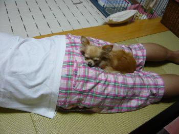 blog2011091601.jpg