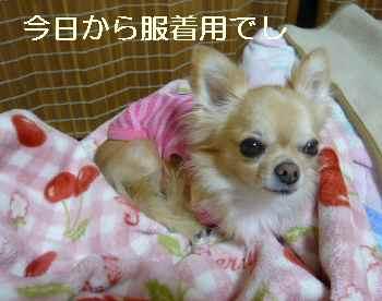 blog2011092303.jpg