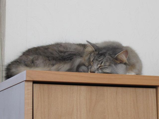 ツンデレ猫1