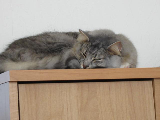ツンデレ猫2