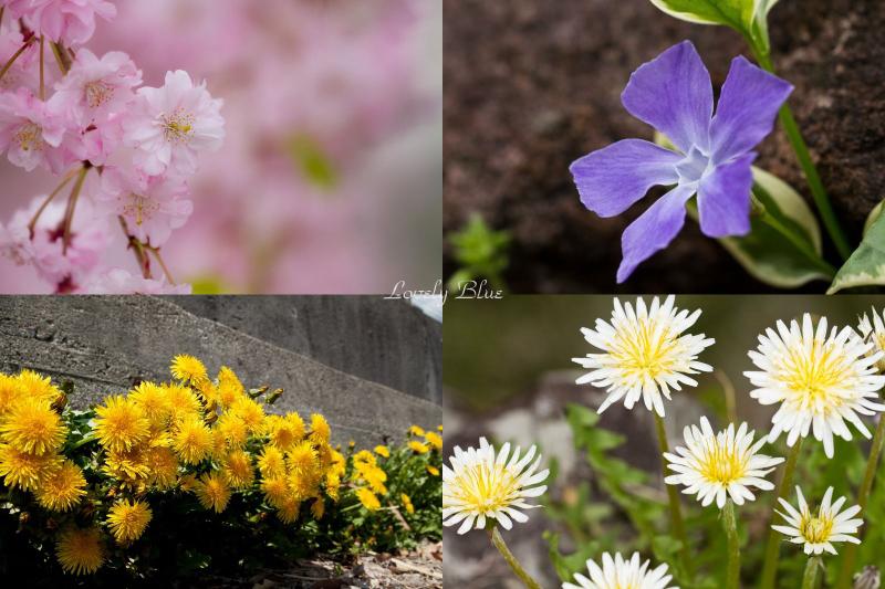 春花5のコピー