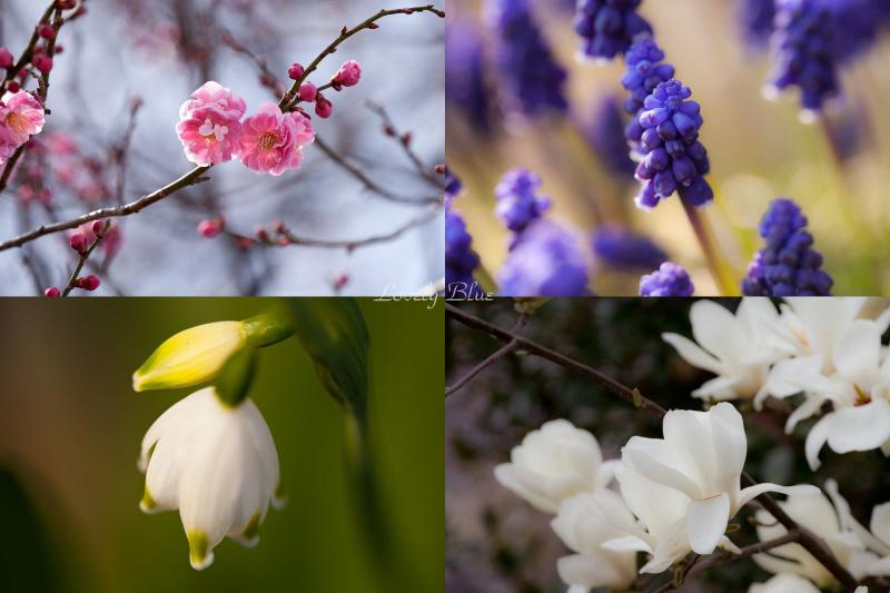 春花4のコピー