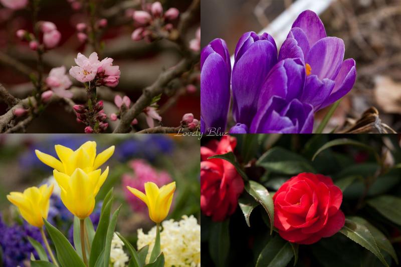 春花2のコピー