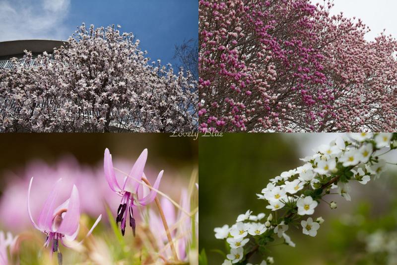 春花6のコピー