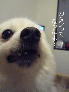 azuki1109010.jpg
