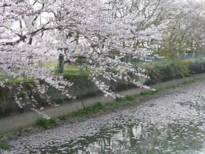 藤原京跡北側の池