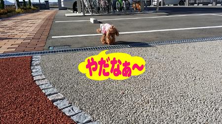 3_20141121214901490.jpg